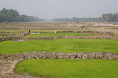reap: Rice paddies and irrigation, outside  Siem Reap,  Cambodia