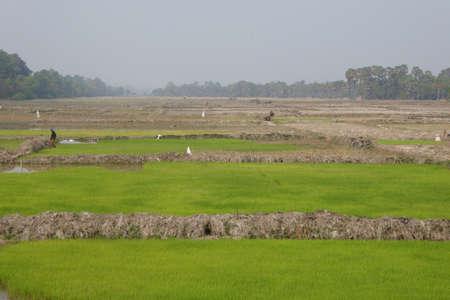 paddies: Rice paddies and irrigation, outside  Siem Reap,  Cambodia