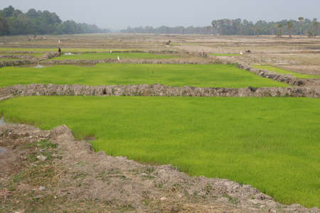siem reap: Rice paddies and irrigation, outside  Siem Reap,  Cambodia