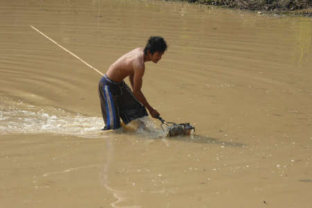 siem reap: SIEM REAP, CAMBODIA - FEB 15, 2015 - Young man uses a rake to catch  fish in a irrigation pond  near Siem Reap,  Cambodia