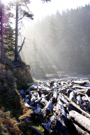 oswald: Morning sun streaming through old growth forest with driftwood on the beach Short Sand Beach, Oswald West State Park, Oregon
