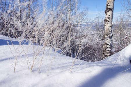 glisten: Early morning frost glistens on bare branches, Cordillera,  Colorado Stock Photo