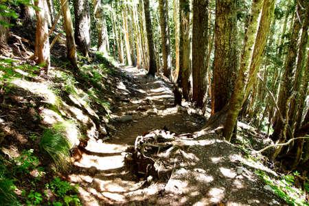 mount rainier: Hiking trail through conifer forest, Mount Rainier National Park