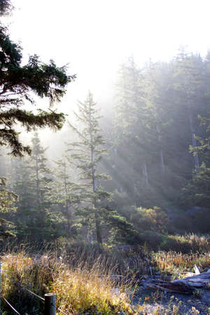 Morning sun streams through old growth forest on beach edge of  Short Sand Beach, Oswald West State Park, Oregon