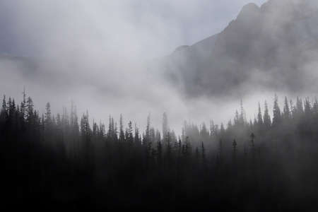provincial forest parks: Morning mist rises from conifer forest in Joffre Lakes Provincial Park, British Columbia, Canada Stock Photo