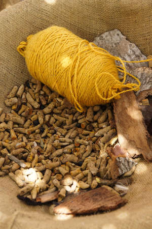 Turmeric gives a yellow color when yarn is dyed, Ephesus, Turkey