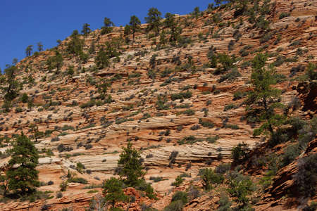 fossilized: Cross current layers of red sandstone, created from fossilized dunes and shifting winds over millions of years, Zion National Park, Utah