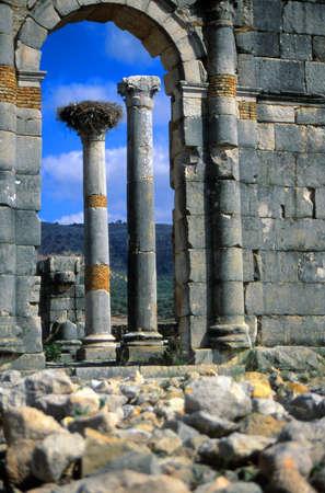 columnas romanas: Antiguas columnas romanas con nidos de cigüeña en la ciudad abandonada de Volubilis, Marruecos