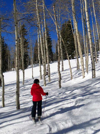 steamboat: Downhill woman  skier  amid bare winter aspens at  Steamboat Springs, Colorado