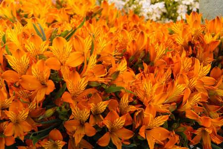 pike place: Orange alstroemeria bouquets for sale at the Pike Place Public Market , Seattle