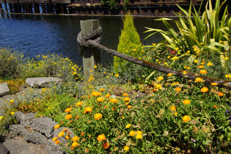 Yellow asters with hawser on the waterfront of  Lake Union, Seattle