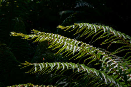 Ferns in deep shadow in forest in Boren Park, Seattle Stock Photo