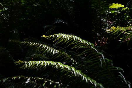 helechos: Ferns in deep shadow in forest in Boren Park, Seattle Foto de archivo