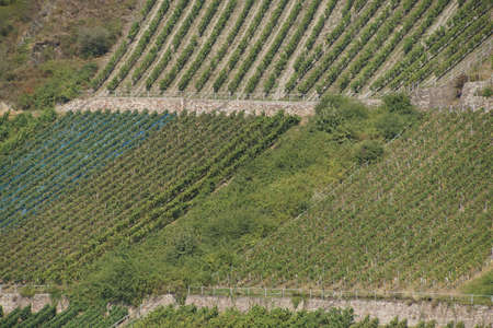 rhine: Vineyards along the  Rhine River, Germany Stock Photo