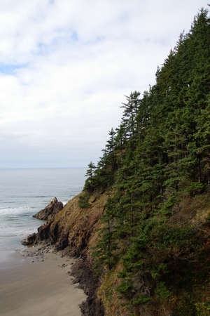 conifers: Conifers on steep hillside near  Indian Beach in Ecola State park,   Oregon Coast