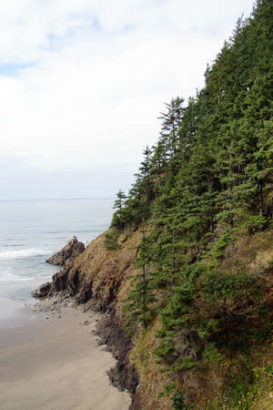 cicuta: Conifers on steep hillside near  Indian Beach in Ecola State park,   Oregon Coast