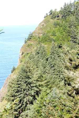 cicuta: Las coníferas en la ladera empinada cerca de la playa india en Ecola State Park, Oregon Coast