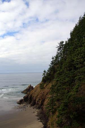 cicuta: Conifers on steep hillside near  Indian Beach in Ecola State park,   Oregon Coast