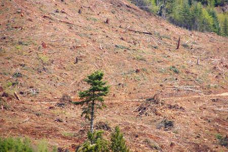 oregon cascades: Clear cut logging slope,  just outside Willamette National Forest,  Central Oregon Cascades
