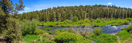 Conifer forest along the Deschutes River  in the high desert of central Oregon, near Redmond.