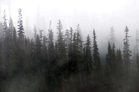 Morning mist rises from conifer forest in Joffre Lakes Provincial Park, British Columbia, Canada Stock Photo