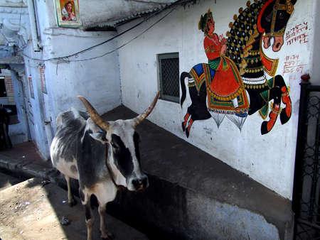 Caparisoned horse on parade. painted on palace walls  Udaipur, India