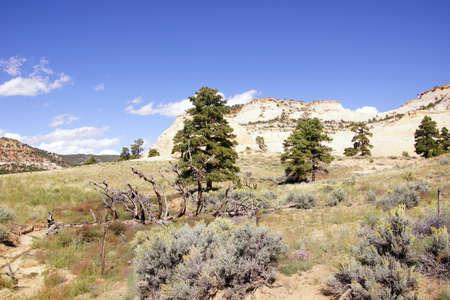 escalante: White sandstone buttes, Escalante Staircase National Monument, Utah Stock Photo
