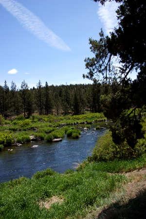 pine creek: Conifer forest along the Deschutes River  in the high desert of central Oregon, near Redmond.