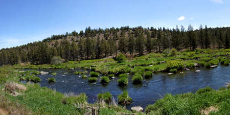 pine creek: Panorama - Conifer forest along the Deschutes River  in the high desert of central Oregon, near Redmond.