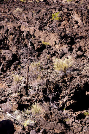 labourers: Lava flow with Ponderosa pines, Sunset Crater National Monument, Arizona