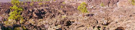 obrero: Panorama, el flujo de lava con pinos Ponderosa, Sunset Crater monumento nacional, Arizona