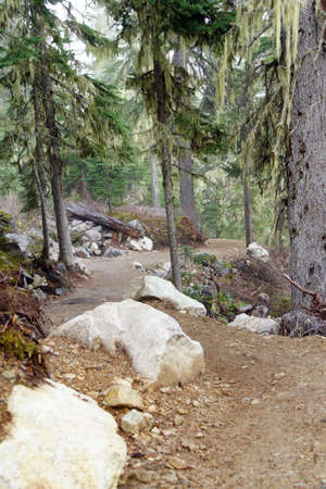 conifer: Trail through conifer forest Stock Photo