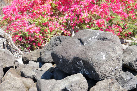 kona: Detail, rough lava from ancient volcanic eruption,  in  Kona, Hawaii