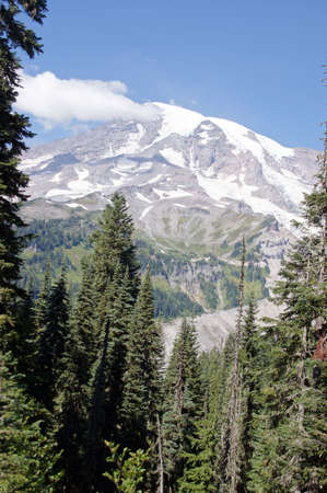 Glaciers on Mount Rainier  with conifers and meadows in foreground