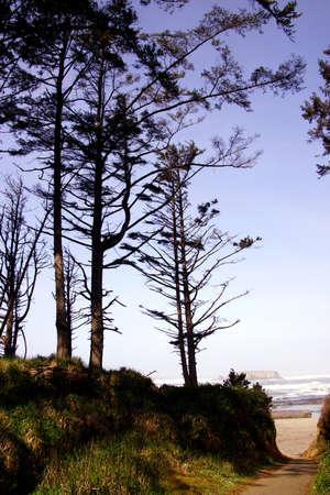 オター ロック、オレゴン州の海岸の近くの沿岸の丘に沿って背の高い針葉樹 写真素材