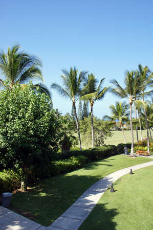 kona: Coconut palms and vacation condominiums  with manicured lawns at a timeshare resort near  Kona, Hawaii