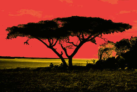 Acacia tree provides shade in the  Ngorongoro Crater, Tanzania Stock Photo - 79014432