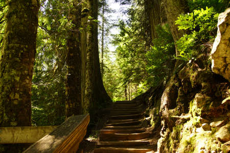 Wooden steps through conifer forest along the Denny Creek Ttrail in the  Snoqualmie National Forest, Washington Stock Photo