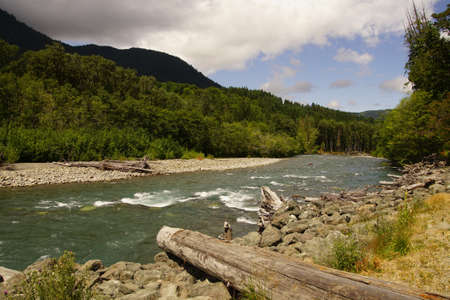 Driftwood on     the Elwha River in Olympic National Park, Washington