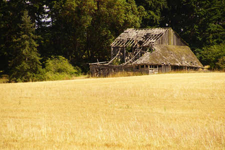 Rundown old barn outside Sequim, Washington Stok Fotoğraf