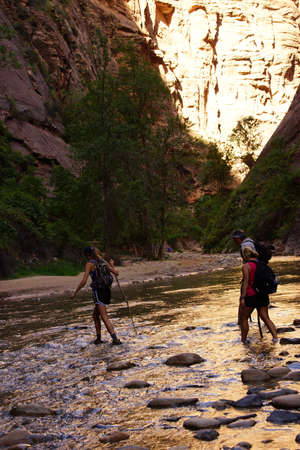 ZION, UTAH - SEP 26, 2013 - Hikers wade across the Virgin River, Zion National Park, Utah