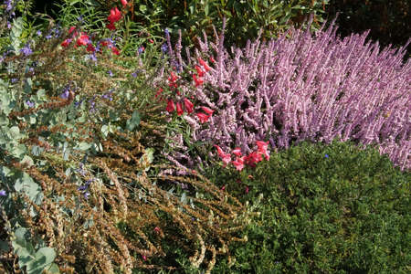 Red bell flowers and lavender heather in summer garden in Seattle, Washington