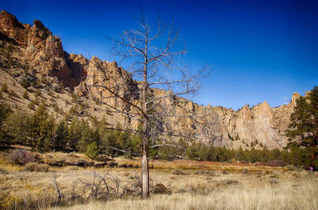 Juniper snag on the Crooked River valley floor at Smith Rock State Park, Oregon