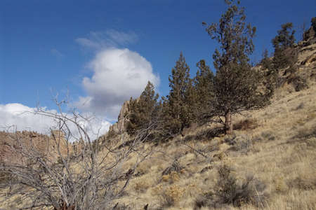 Juniper trees and desert grass in Smith Rock State Park, Oregon