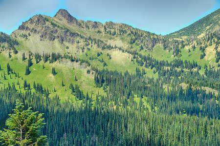 Green meadows downslope from Sunrise in Mount Rainier National Park,  Washington Stock Photo