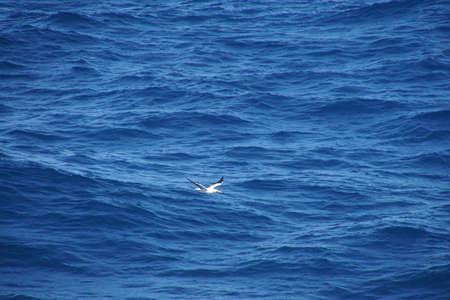 Sterne volant à côté d'un bateau de croisière dans la mer des Caraïbes au large d'Aruba Banque d'images - 94571368