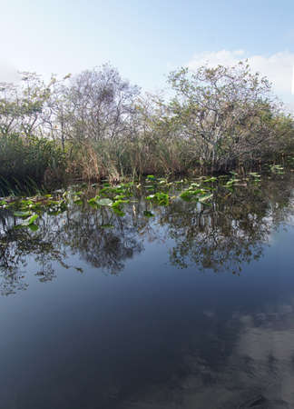 Slow moving water in a canal in the everglades nearFort Lauderdale, Florida