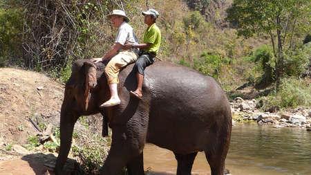 KALAW, BURMA - FEB 27, 2015 - Tourist rides an elephant in the  Elephant conservation camp near Kalaw Myanmar (Burma) Editorial