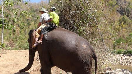 KALAW, BURMA - FEB 27, 2015 - Tourist rides an elephant in the  Elephant conservation camp near Kalaw Myanmar (Burma) 에디토리얼