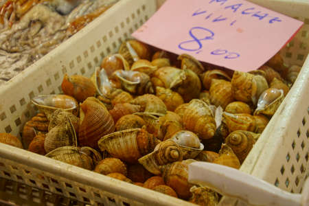 Fresh snails for sale at the central Market in Civitavecchia, Italy 에디토리얼